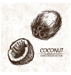 digital detailed coconut hand drawn vector image vector image
