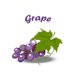 Fresh bunch of grapes vector