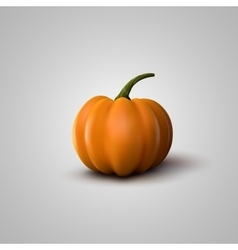 Of realistic pumpkin vector