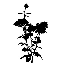 Black and white rose silhouette vector