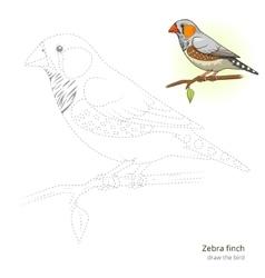 Zebra finch bird learn to draw vector image