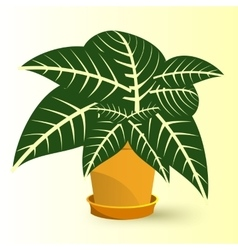 Sanchezia plant in a pot vector