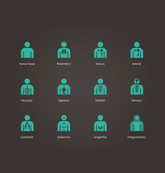 Anatomy human systems icons set vector