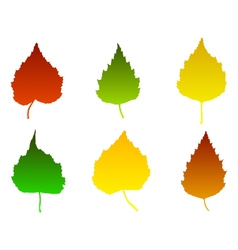 Birch leaves vector image vector image