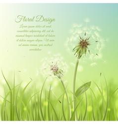 Floral design poster of dandelion vector image