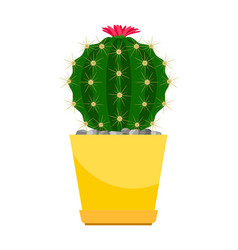 cactus with pink flower vector image