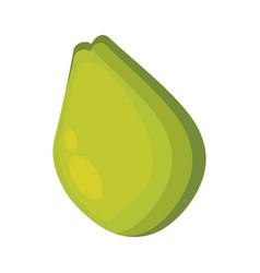 Pear fruit healthy icon vector