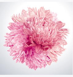 Pink asters and chrysanthemums sphere vector