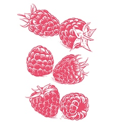 Raspberry drawing fruit sketch vector