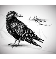 bird sketch vector image