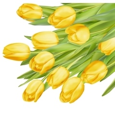 Bouquet of yellow tulips EPS 10 vector image vector image