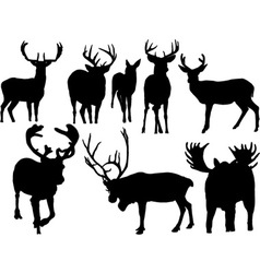 deer vs vector image vector image