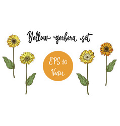 Set of gerbera daisy yellow flowers and green vector