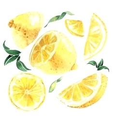Watercolor set of lemons vector