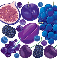 Mix blue and lilac fruits and berries vector image vector image