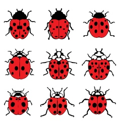 red ladybugs 9 vector image vector image