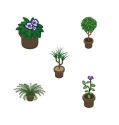 Isometric houseplant set of tree flowerpot vector