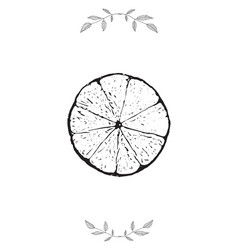 lime and leaves template design decorative vector image