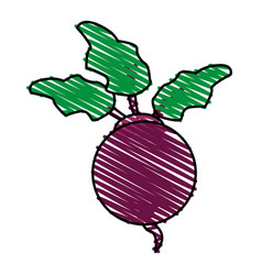 Color crayon stripe violet beet vegetable food vector