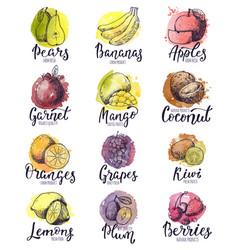 Fruits fruity apple banana and exotic mango vector