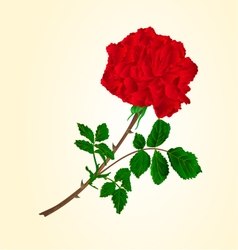 Red rose stem with leaves and blossoms vector