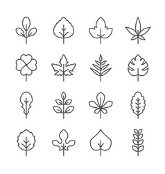 set line icons of leaf vector image vector image