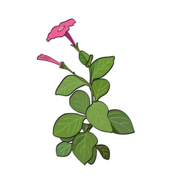 Summer flower - red petunia vector