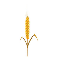 Wheat spike icon cartoon style vector