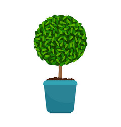 Myrtus tree house plant vector