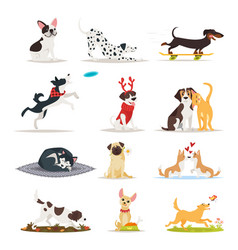set of different dog breeds vector image vector image