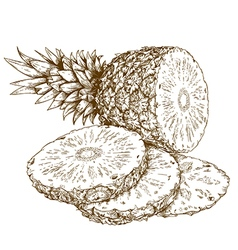 Etching pineapple slices vector