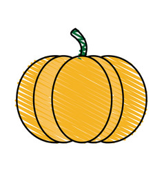 Color crayon stripe orange pumpkin fruit food vector