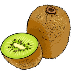 Kiwi fruit cartoon vector