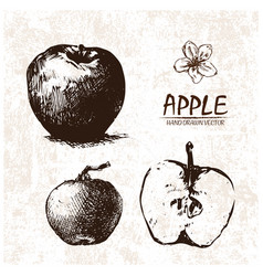Digital detailed apple hand drawn vector