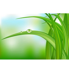 Green grass and water drops vector