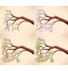 Tree branch in different seasons vector