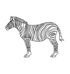 African desert zebra wild cloven-hoofed animal vector