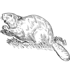 European beaver or eurasian beaver drawing vector