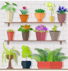 Houseplant Set Design Flat Concept vector image
