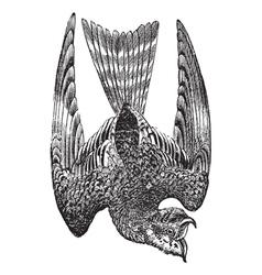 Nighthawk vintage engraving vector image