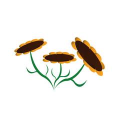 3 sun flower background logo banner vector image