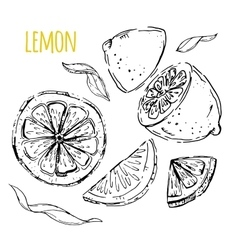 The drawn set of lemons vector
