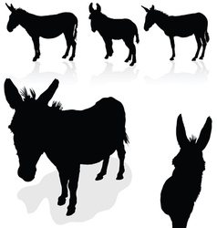 donkey black silhouette vector image