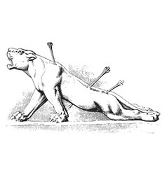 Wounded lioness is a most mournful and moving vector