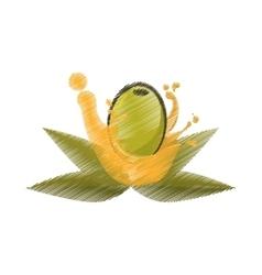 Olive leaves oil splash drawing vector