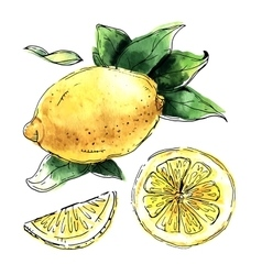 Watercolor set of lemons vector