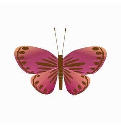 Isolated butterfly on a white background vector image