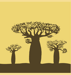 Three baobabs at sunset or sunrise vector