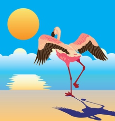 Flamingo on the shore vector