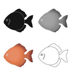 Discus fish icon cartoon singe aquarium fish icon vector